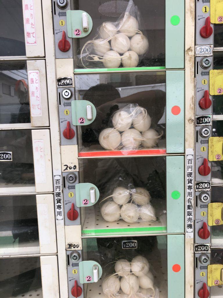 無人野菜販売所の丸大根