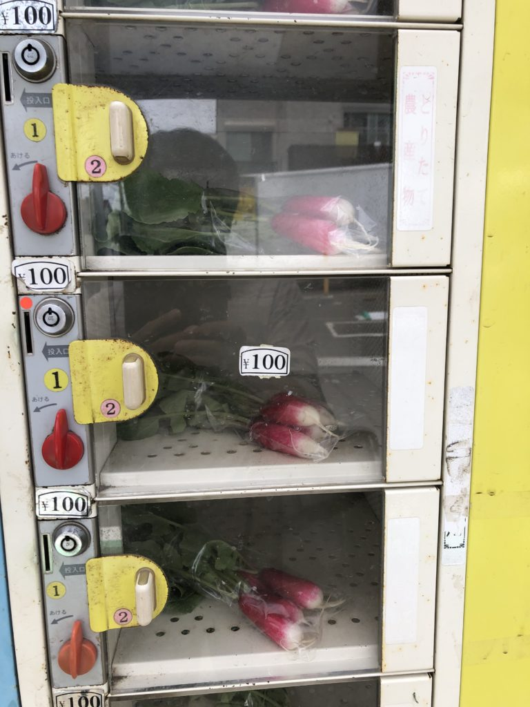 無人野菜販売所の赤カブ