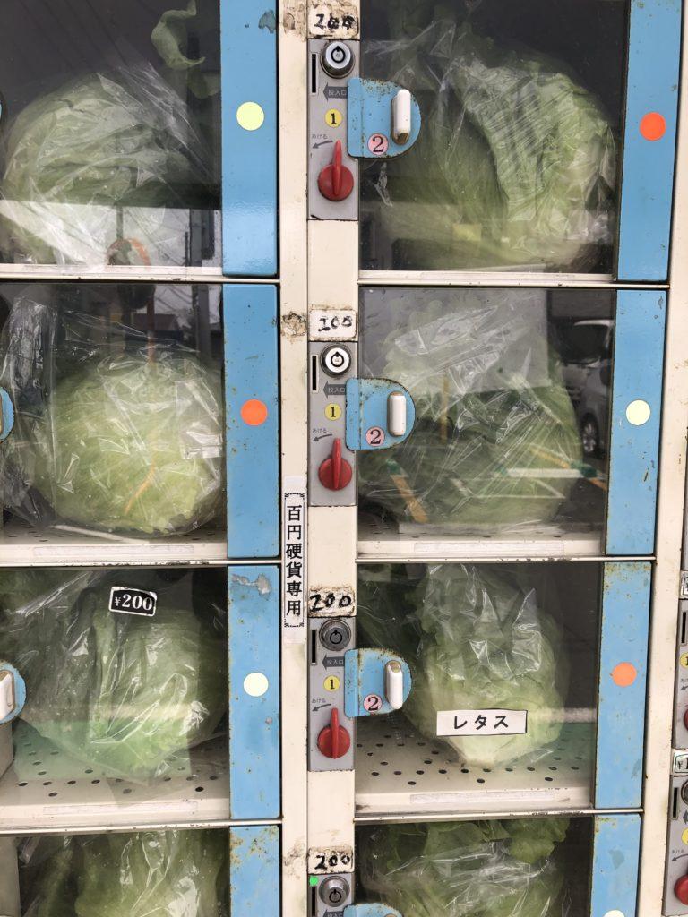 無人野菜販売所のレタス